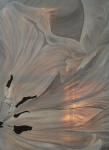 2011 80 x 60 Beige tulipan 2 af 2 Højre m. sølv ramme - akryl