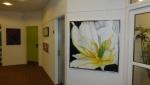 Hvid tulipan fra Tivoli.JPG