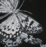 2008 28.03. 30 x 30 Sort/Hvid sommerfugl - akryl  SOLGT