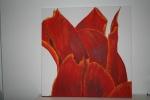 2010 50 x 50 Orange tulipaner med hvid baggrund under bearbejdning- akryl  SOLGT