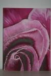 2008 12.03. 50 x 40 Udsnit af Pink rose - akryl