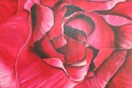 2011 100 x 150 Pink rose m. sølv ramme - akryl SOLGT