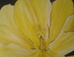021011 60 x 80 Gul tulipan m. sort ramme - akryl