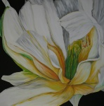 100 x 100 Hvid tulipan m. sølv ramme - akryl