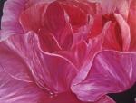 60 x 80 Kunze rose m. sølv ramme - akryl