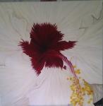 100 x 100 Hawaiiblomst rød hvid m. sølv ramme - akryl