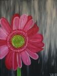 2013 80 x 60 Pink gerbera på rå bund med sølv ramme Akryl.JPG