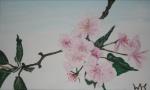 2008 07.04. 30 x 50 Kirsebærblomst - liggende  SOLGT