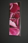 Pink rose oprejst. Udstilling hos ASE 2010. 90 x 30.